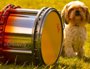 Just shows you that, even mans best friend, loves drumming.